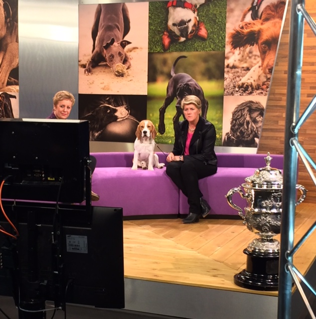 Crufts15 Stew  Claire watching TV