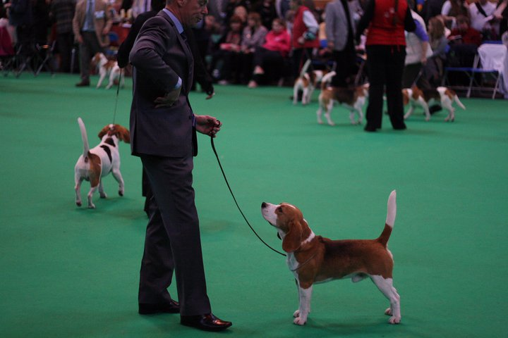 duncan at crufts 2011