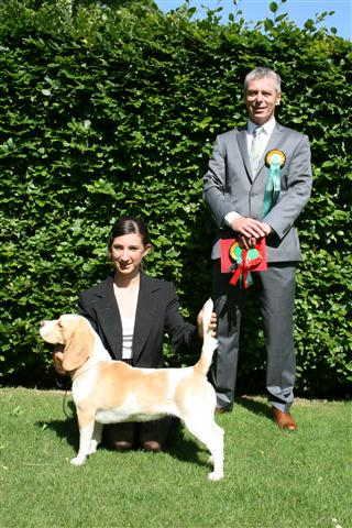 the beagle club junior handling