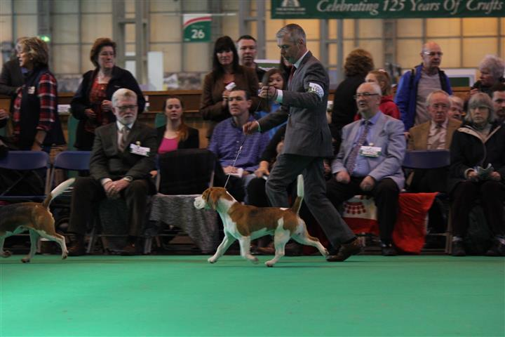 Crufts 2016 Stew moving Small