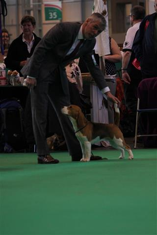 Crufts Berry 2016 Small
